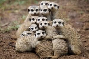 hugging_animals_08