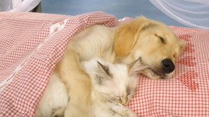 cat_dog_couple_sleep_1820_1920x1080
